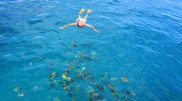 Plongées en snorkeling