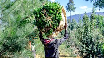 Comment luttre contre la déforestation à Madagascar avec Coeur de Forêt.